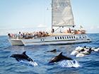 Tocht Super Katamaraan Kust en Dolfijnen